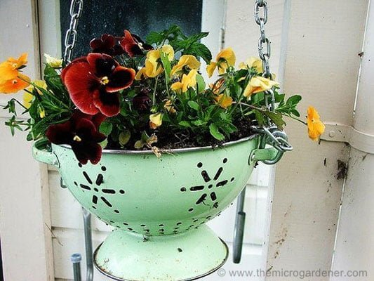 Make a free hanging basket with a colander
