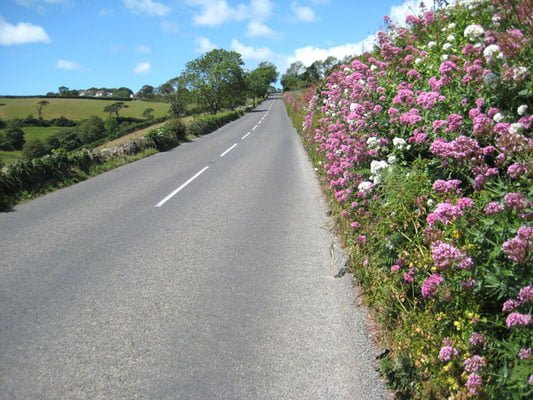 Collect seeds from a roadside verge