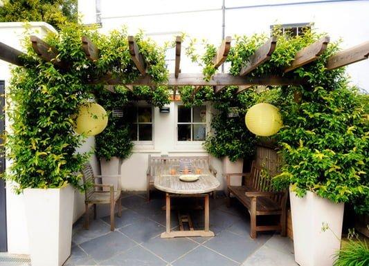 Planting ideas for a garden pergola