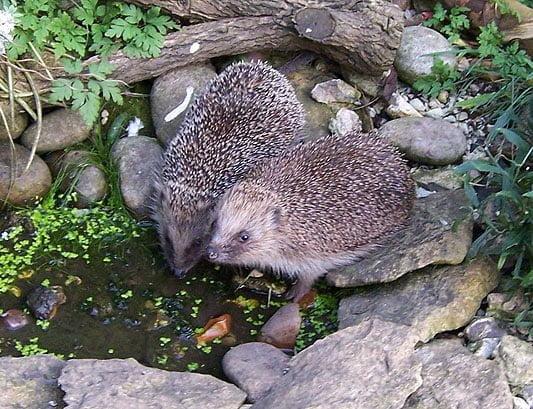 Make a garden pond for wildlife