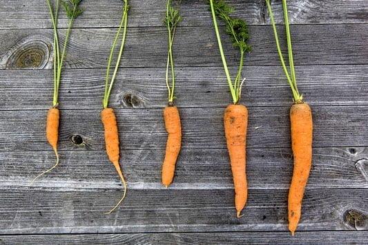 Organic veg patch
