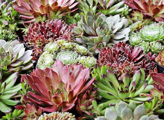 Choosing plants for gardening in a changing climate