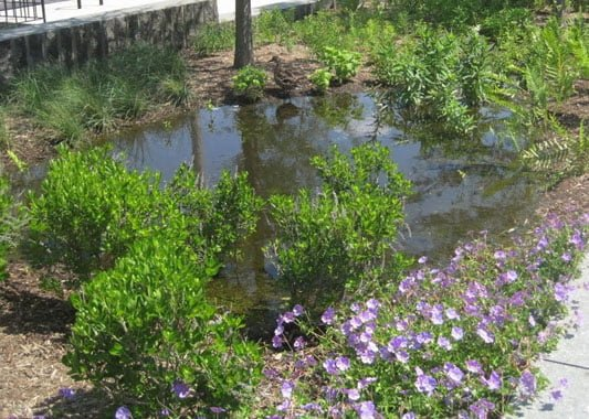 Your rain garden guide - construction, location, plants and more