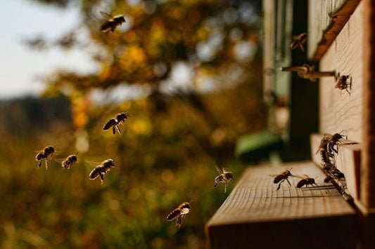 Keep bees yourself