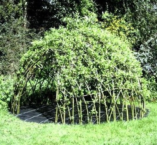 A living willow playhouse