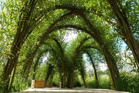 Amazing living willow structure design