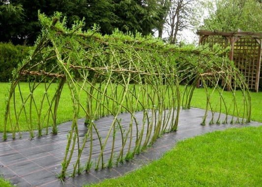 Preparations for living willow structures