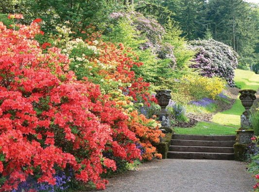 Dawyck Garden