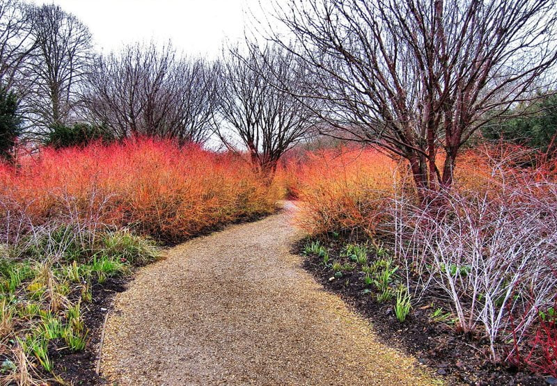 Anglesey Abbey - One of the best gardens to visit this winter?