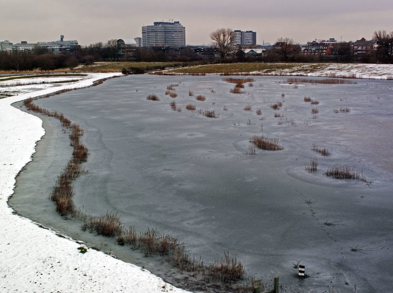 London Wetland Centre - One of the best gardens to visit this winter?