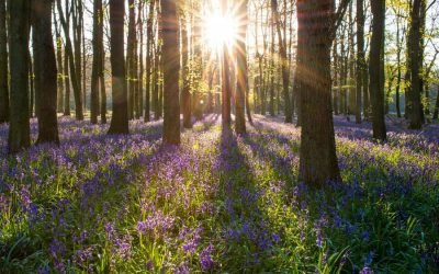 Native British trees – what you should (and shouldn't) plant in your garden